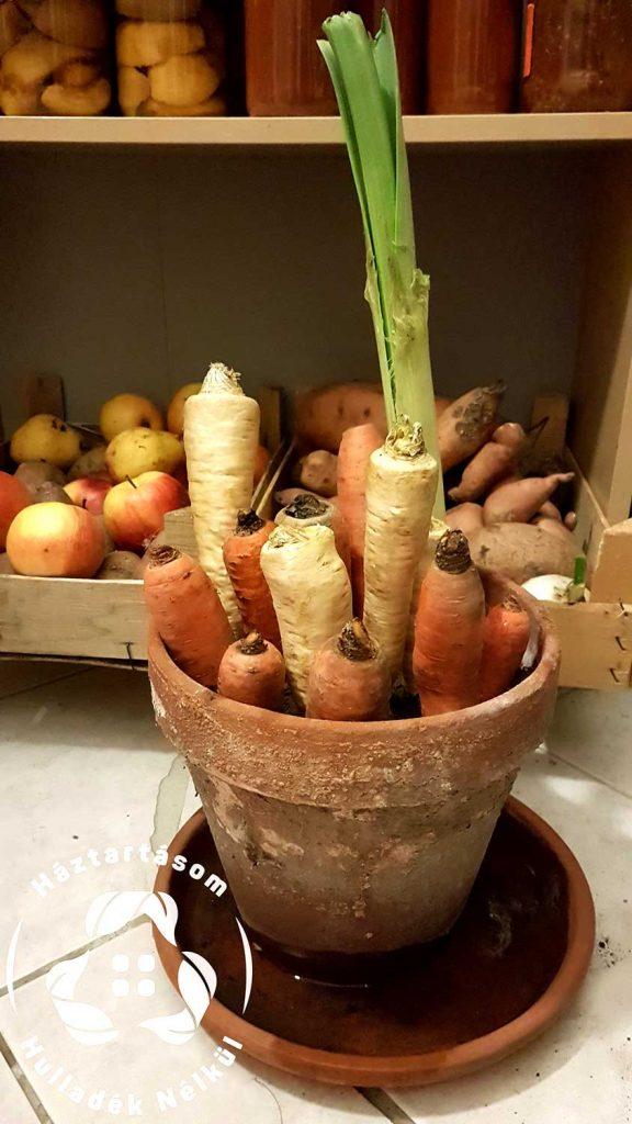 zöldség, répa veremben, földben tárolás
