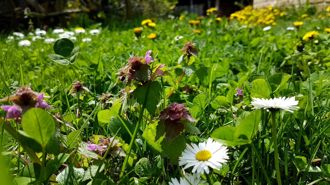 természetes kert