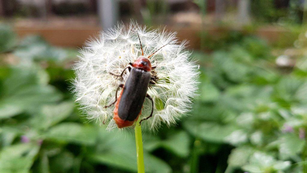 természetes kert rovarokkal